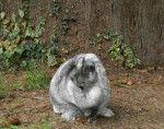 ایسٹر خرگوش