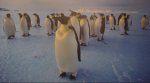 Животиње на антарктичкој зими